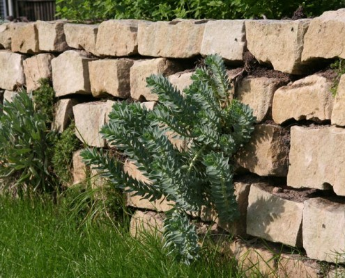 Mauer im Garten