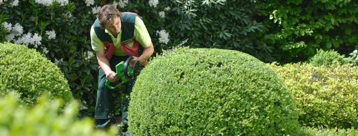 Die fachgerechte Pflege ist A und O für jeden Garten
