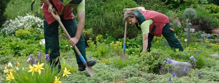 Die Grundpflege für Ihren Garten