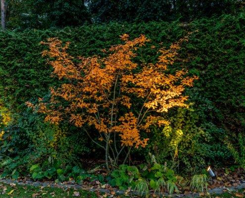 Garten Effektbeleuchtung
