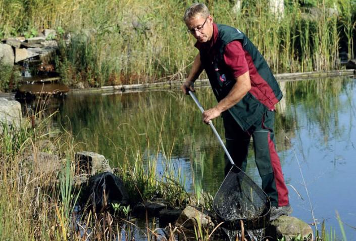 Teichpflege in Frühling vom Profi